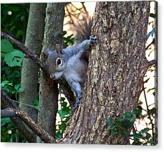 Squirrel I Acrylic Print by Jai Johnson