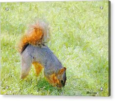 Squirrelly Acrylic Print by Jeff Kolker
