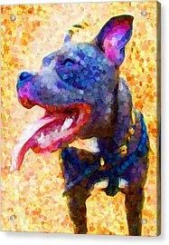 Staffordshire Bull Terrier In Oil Acrylic Print by Michael Tompsett