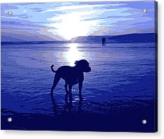 Staffordshire Bull Terrier On Beach Acrylic Print by Michael Tompsett