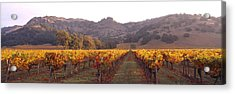 Stags Leap Wine Cellars Napa Acrylic Print by Panoramic Images