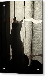 Stalker Acrylic Print by Cambion Art