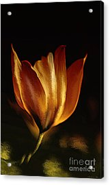 Stand Alone Acrylic Print by Elaine Manley