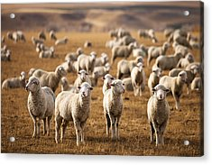 Standing Out In The Herd Acrylic Print by Todd Klassy