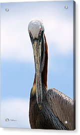 Stare Down Acrylic Print by Christopher Holmes