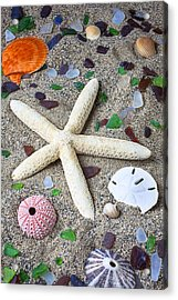 Starfish Beach Still Life Acrylic Print by Garry Gay