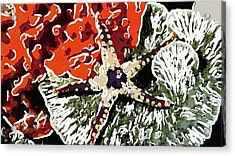 Starfish In Coral Reef 7 Acrylic Print by Lanjee Chee