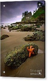 Starfish On The Rocks Acrylic Print by Inge Johnsson
