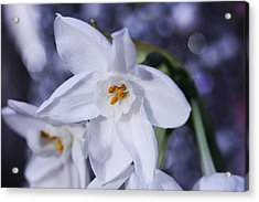 Starlight Acrylic Print by Connie Handscomb