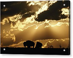 Stately American Bison Acrylic Print by George F. Mobley