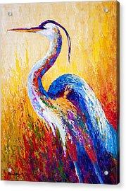 Steady Gaze - Great Blue Heron Acrylic Print by Marion Rose