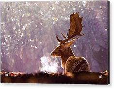 Steamy Stag Acrylic Print by Roeselien Raimond