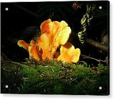 Sticky Fungus Acrylic Print by Klee Miller