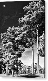 Stillness Acrylic Print by Gerlinde Keating - Galleria GK Keating Associates Inc