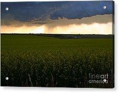 Storm Over The Canola Fields Acrylic Print by Mario Brenes Simon