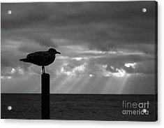 Stormy Sentinel Acrylic Print by James Brunker