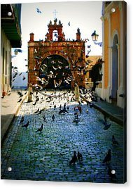 Street Pigeons Acrylic Print by Perry Webster