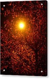 Streetlamp Through Tree Acrylic Print by Utopia Concepts