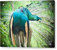Stretching Out Acrylic Print by Judy Kay