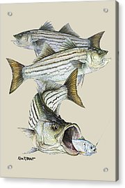 Striped Bass Acrylic Print by Kevin Brant