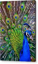 Strut Acrylic Print by Angelina Vick