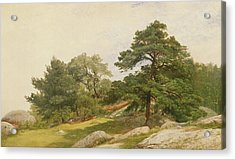 Study For Trees On Beverly Coast Acrylic Print by John Frederick Kensett
