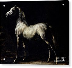 Study Of A Dapple Grey Acrylic Print by Theodore Gericault