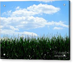 Summer Breeze Acrylic Print by Robyn King