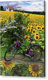Summer Cycling Acrylic Print by Debra and Dave Vanderlaan