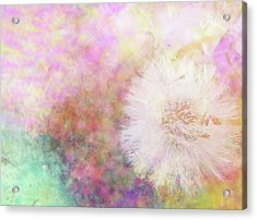 Summer Flower  Acrylic Print by Nat Air Craft