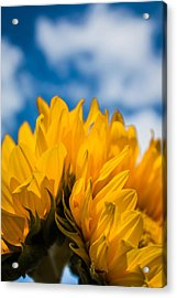 Summer Joys Acrylic Print by Shelby Young