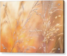 Summer Mornings Acrylic Print by Darren White