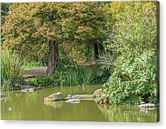 Summer Pond Acrylic Print by Kate Brown