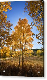 Sun Through Aspens Acrylic Print by Ron Dahlquist - Printscapes
