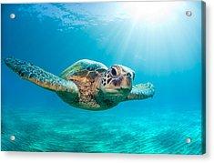 Sunburst Sea Turtle Acrylic Print by Monica and Michael Sweet