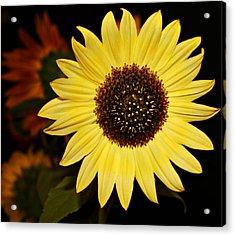 Sunflower Acrylic Print by Cathie Tyler
