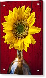 Sunflower Close Up Acrylic Print by Garry Gay