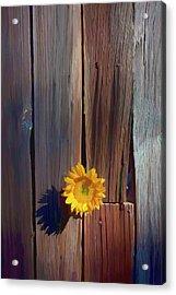 Sunflower In Barn Wood Acrylic Print by Garry Gay