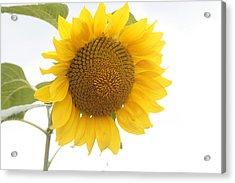 Sunflower Salutation  Acrylic Print by Georgia Fowler