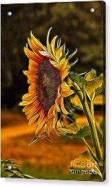 Sunflower Series Acrylic Print by Wendy Mogul