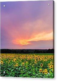 Sunflower Sherbert Acrylic Print by Bryan Bzdula
