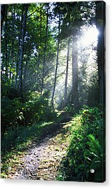 Sunlight Through Trees, Ecola State Acrylic Print by Natural Selection Craig Tuttle