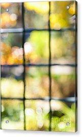 Sunny Outside Acrylic Print by Elena Elisseeva