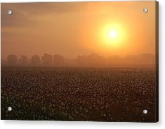 Sunrise And The Cotton Field Acrylic Print by Michael Thomas