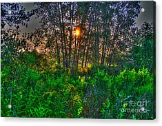 Sunrise In The Swamp-4 Acrylic Print by Robert Pearson