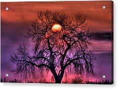 Sunrise Through The Foggy Tree Acrylic Print by Scott Mahon