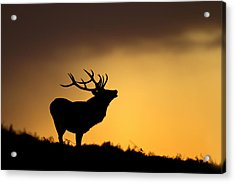Sunrise With Red Deer Acrylic Print by Andy Luberti