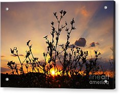 Sunset 2 Acrylic Print by SK Pfphotography