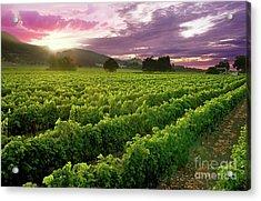 Sunset Over The Vineyard Acrylic Print by Jon Neidert