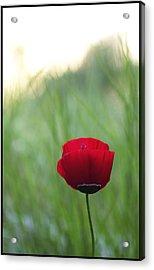 Sunset Poppy Acrylic Print by Julia Bridget Hayes